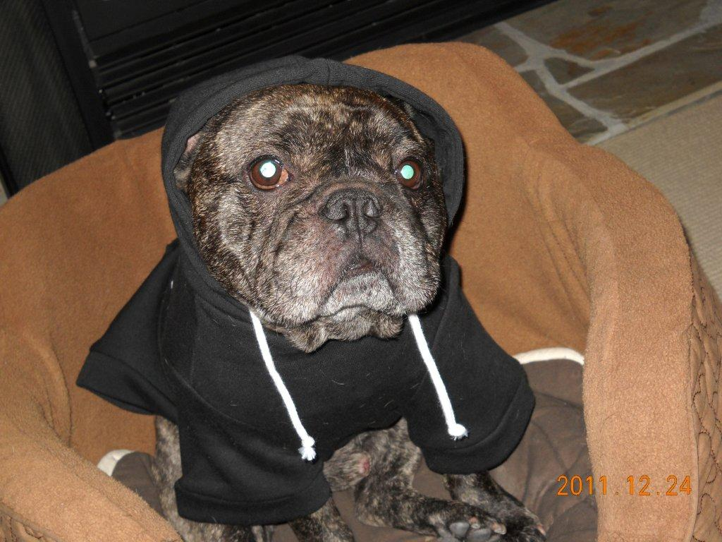 Grand-Dog Bert in X'mas Hoodie